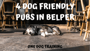 4 Dog Friendly Pubs in Belper