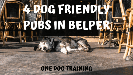 Top 4 Dog Friendly Pubs In Belper