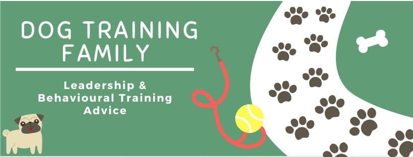 Dog Training Family Derby 2