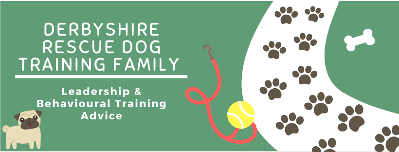 derbyshire rescue dog training family