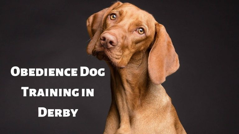 obedience dog training in derby