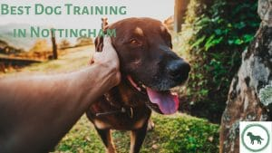 Best Dog Training in Nottingham