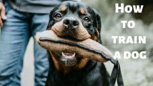 Top 4 ways on How to Train a Dog