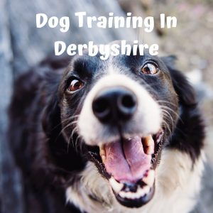 dog training in derby