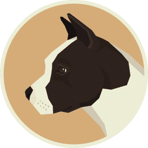 American Staffordshire Terrier – Things you NEED to Know