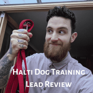 Review Of Halti Dog Training Lead