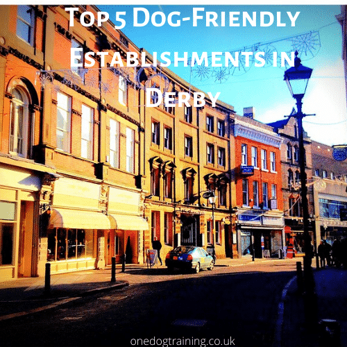 Top 5 Dog Friendly Establishments in Derby