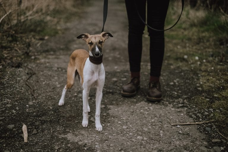 Dog walkers in and around Belper