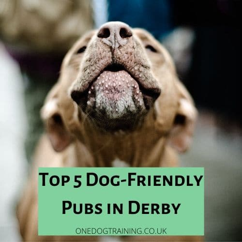 Top 5 Dog Friendly Pubs in derby