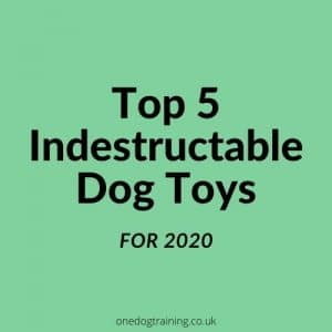 Top 5 Indestructible Dog Toys For 2020