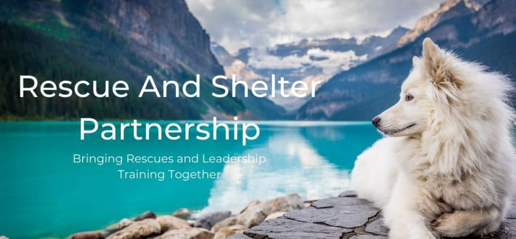 Rescue And Shelter Partnership