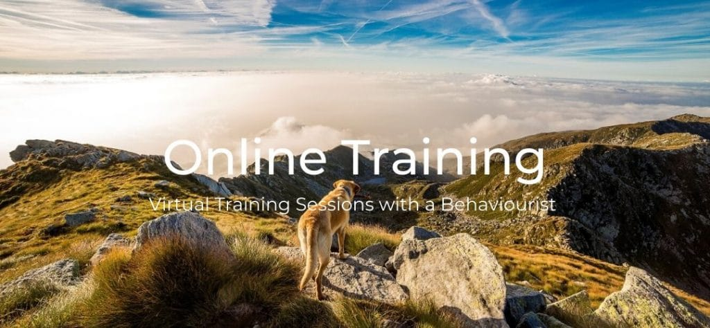 online dog training in derby