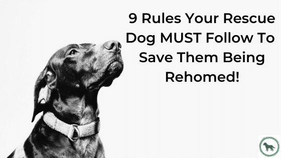 9 Rules Your Rescue Dog MUST Follow To Save Them Being Rehomed