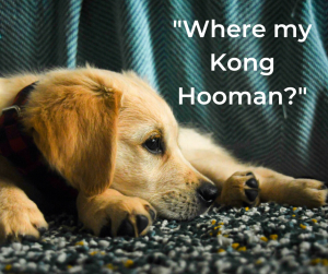 7 Days To Entertain A Bored Rescue Dog – Day 4 The Kong