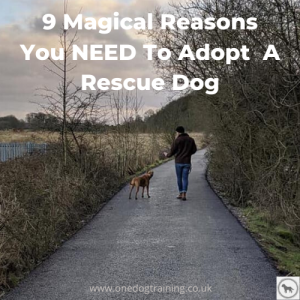 9 Magical Reasons You NEED To Adopt A Rescue Dog