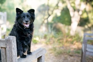 Adopting A Rescue Dog – The First Week