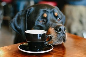 7 Days To Entertain A Bored Rescue Dog – Day 3 Magic Cups