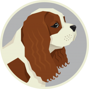 Cavalier King Charles Spaniel – Things You NEED To Know