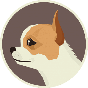 Chihuahua – Things You NEED To Know