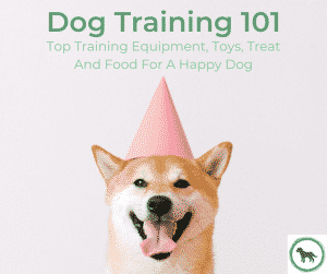 Dog Training 101: Top Training Equipment, Toys, Treat And Food For A Happy Dog