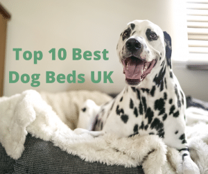 Top 10 Best Dog Beds UK