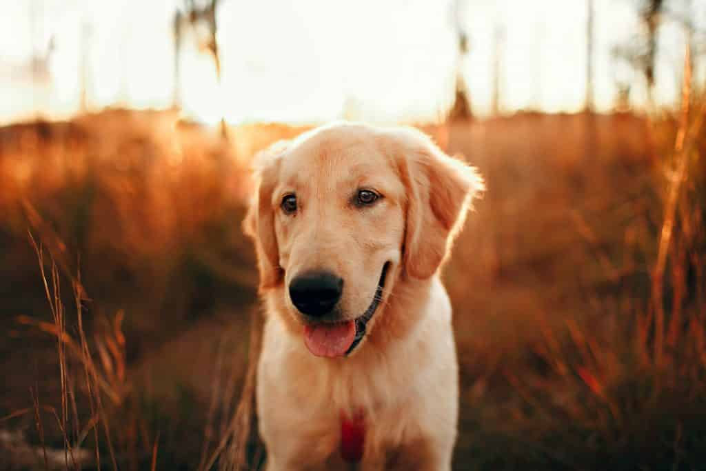 3 ways to be a consious DOG OWNER