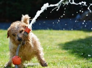 5 Ways You Can Improve Your Dog's Life